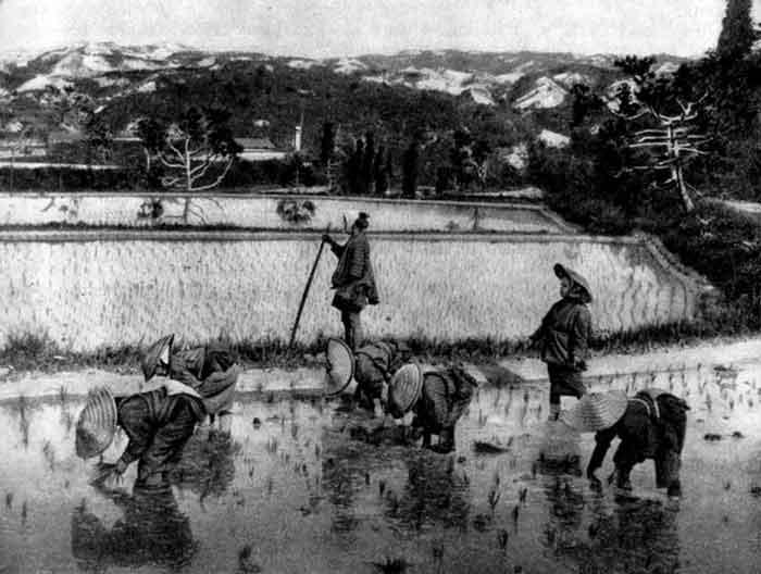 Япония. Посадка риса. Фото 1888 г.