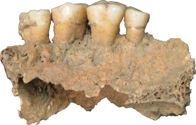 Анализ зубного налета 1,2 миллиона-летнего человека рассказал о рационе питания древних пра-людей.