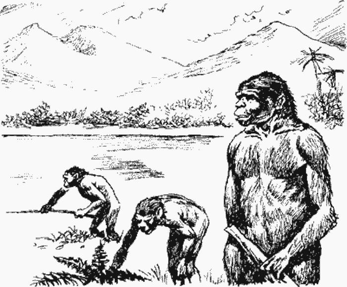 питекантроп - оин из наиболее древних и примитивных представителей человеческого рода